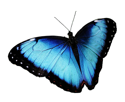 Butterfly, Blue Butterfly, Butterfly Png