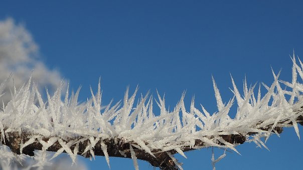 Hoarfrost, Eiskristalle, Iced, Ripe, Close, Cold