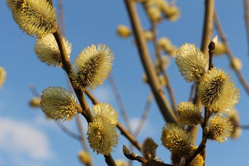 Branch, Tree, Nature, Plant, Flower, Verba, Closeup