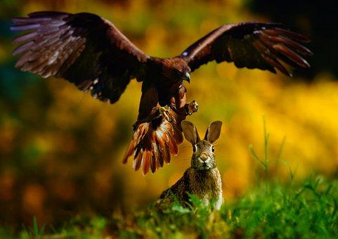 Nature, Bird, Fauna, Raptor, Outdoor, Animal, Wood