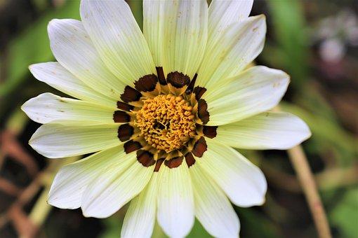 Nature, Flower, Plant, Garden, Petal, Summer, Flowers