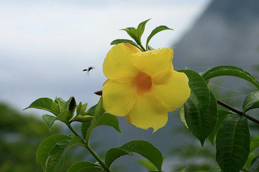 Plant, Nature, Leaf, Flower, Insect, Hibiscus Yellow