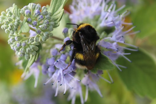 Nature, Flower, Flora, Bee, Insect, Solitary