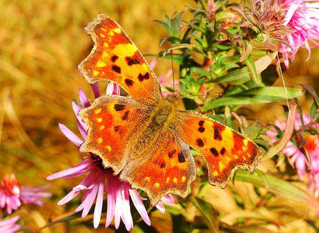 Nature, Flower, Plant, Butterfly Day, Insect, Animals