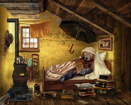 Bear, Attic, Room, Read, Education, Knowledge, Poverty