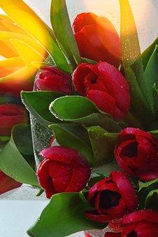 Nature, Tulip, Leaf Plants, Flower, Bouquet De Fleurs