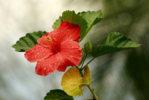 Nature, Plant, Flower, Summer Plant, Leaf, Garden