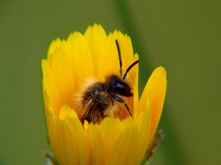 Nature, Insect, Apiformes, Flower, Pollen, Pollination