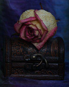 Rose, Jewelry Box, Flower, Dry