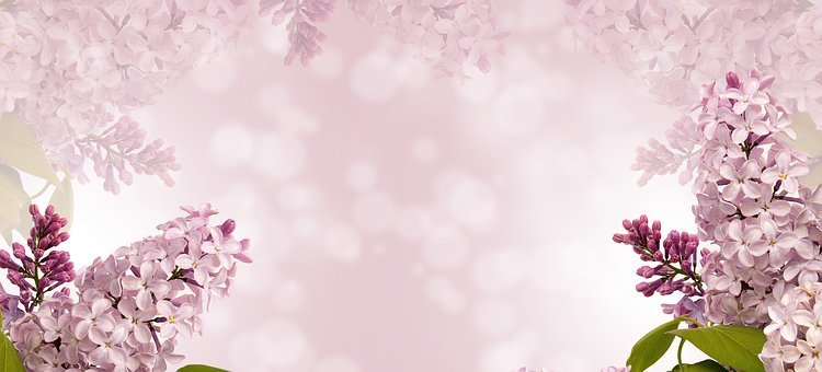 Nature, Flower, Flora, Season, Desktop, Spring, Plant