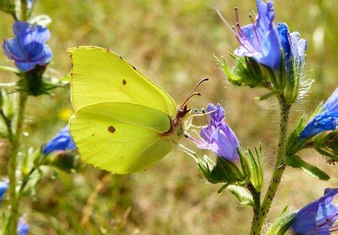 Nature, Flower, Butterfly Day, Summer, No One, Garden