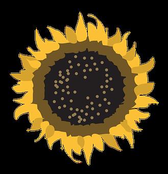 Flower, Symbol, Sun, Nature, Design, Sign, Natural