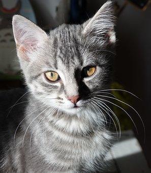 Cat, Baby Cat, Tabby
