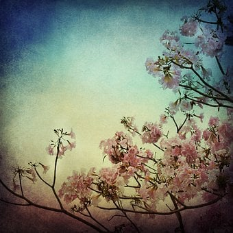 Flower, Background, Texture, Art, Tree, Floral, Spring