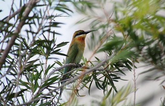Nature, Tree, Bird, Wildlife, Animal, Outdoors, Wild