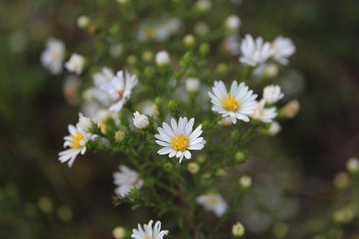 Nature, Flower, Flora, Summer, Outdoors, Wildflower