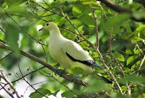 Wildlife, Bird, Nature, Animal, Outdoors, Tree