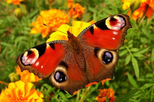 Nature, Butterfly Day, Flower, Insect, Summer, Animals