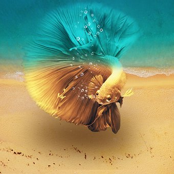 Beach, Tropical, Marine, Color, Sea Creatures
