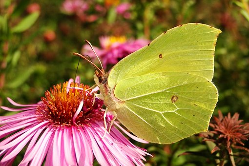 Nature, Flower, Plant, Insect, Garden, Butterfly Day