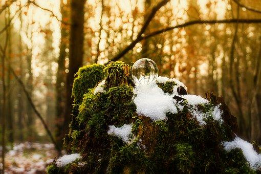 Nature, Wood, Tree, Leaf, Season, Ball, Crystal Ball
