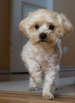 Dog House, Pets, Charming, Animals, National, Dog