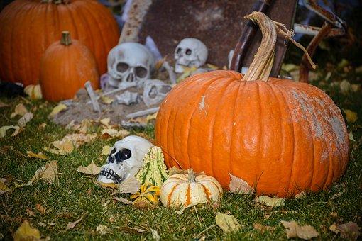 Pumpkin, Halloween, Fall, Thanksgiving, Gourd