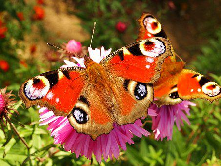 Nature, Insect, Butterfly Day, Animals, Flower