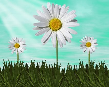 Nature, Plant, Flower, Summer, Color, Margaritas