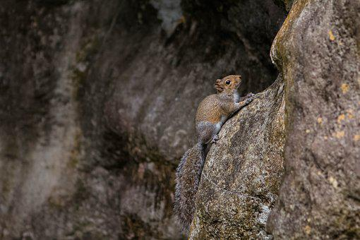 Nature, Wildlife, Outdoors, Mammal, Animal, Squirrel