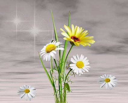 Flower, Plant, Nature, Floral, Summer, Margaritas