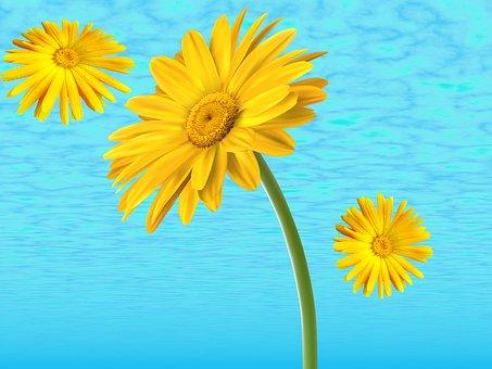Nature, Margaritas, Yellow Daisies, Flowers, Background