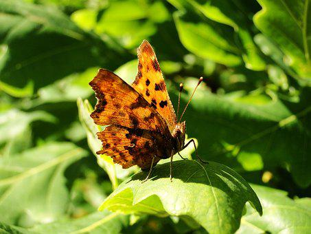 Nature, Insect, Butterfly Day, Leaf, Plant, Animals