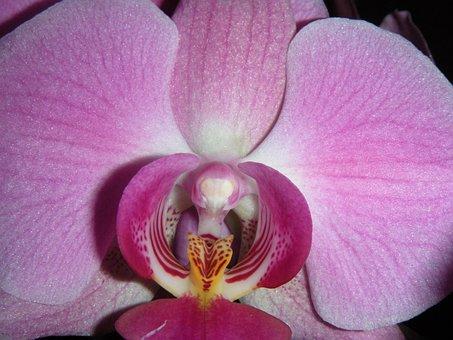 Flower, Petal, Plant, Tropicale, Bloom, Exotic