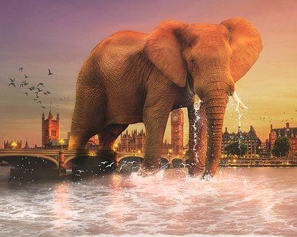 Elephant, Mammal, Ivory, Tusks, Travel, Wildlife