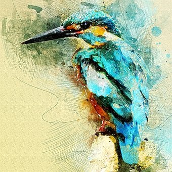 Kingfisher, Bird, Wildlife, Macro, Closeup, Portrait