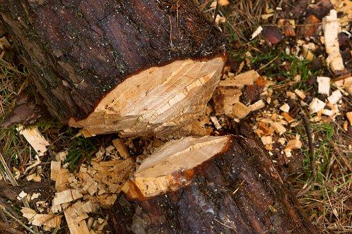 Nature, Wood, Tree, Balance Beam