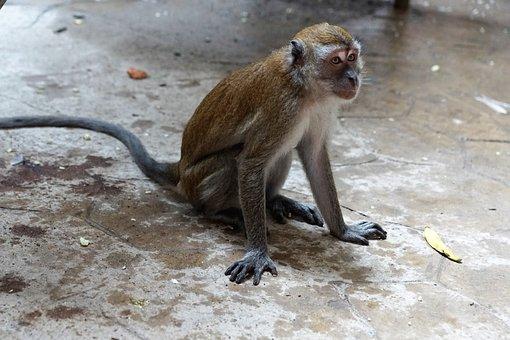 Animal World, Monkey, Nature, Animal, Mammal, Primate