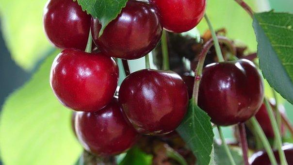 Cherries Well In The Flesh, Very Sweet