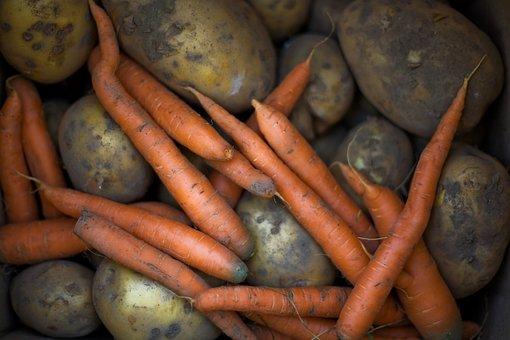 Root, Food, Grow, Root Vegetable, Potato, Closeup