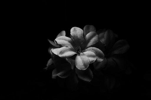 Flower, Nature, Monochrome, Flora, Desktop, Dark, Art