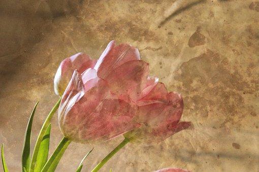 Flower, Bouquet, Tulip, Pink, Color, Flowers Send