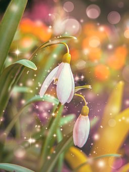 Nature, Spring, Color, Bright, Easter, Plant, Flower