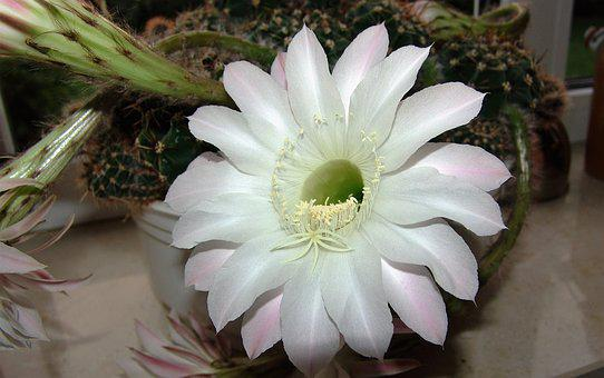 Flower, Nature, Plant, Floral, Garden, Close, Petal