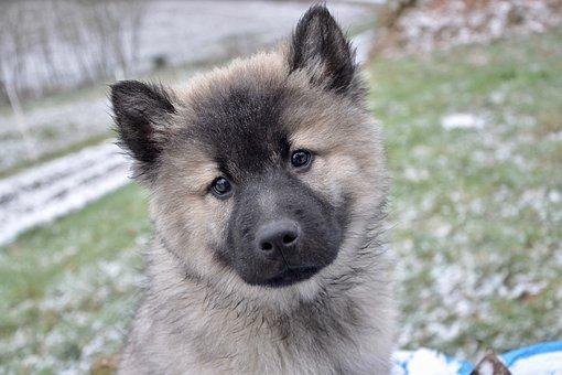 Puppy, Pup, Bitch Christmas, Canine, Dog, Mammal