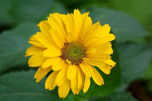 Nature, Plant, Flower, Summer, Leaf, Floral, Blooming