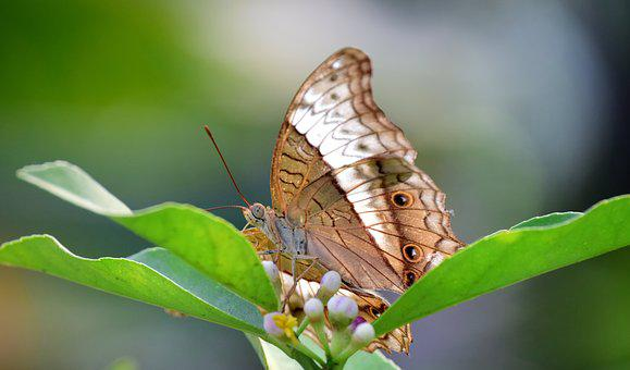 Butterfly, Nature, Insect, Animal World, Wing, Plant
