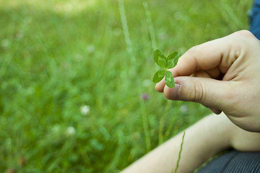 Plant, Lawn, Nature, The Environment, Leaf, Clover