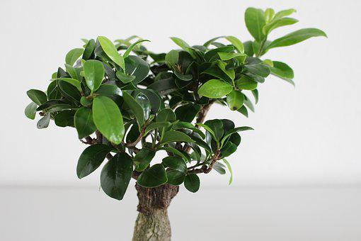 Leaf, Plant, Growth, Nature, Houseplant, Isolated, Tree