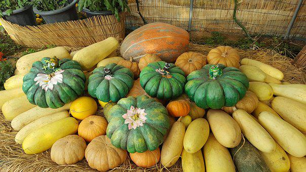 Pumpkin, Autumn, Ranch, Food, Vegetable